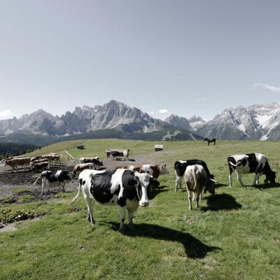 The mountain of alpine pastures